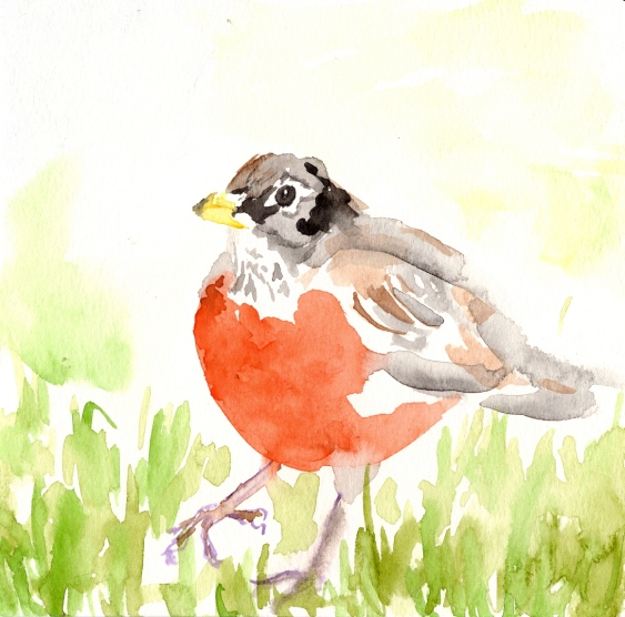 Robin. Watercolor on paper.