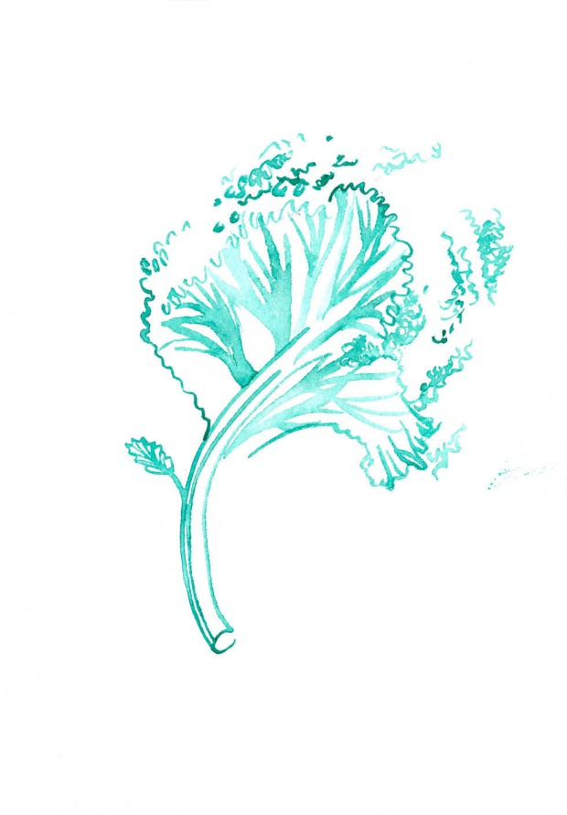Kale. Watercolor on paper.