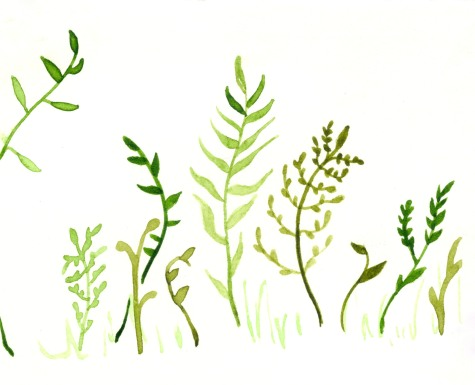 fernyplantythings