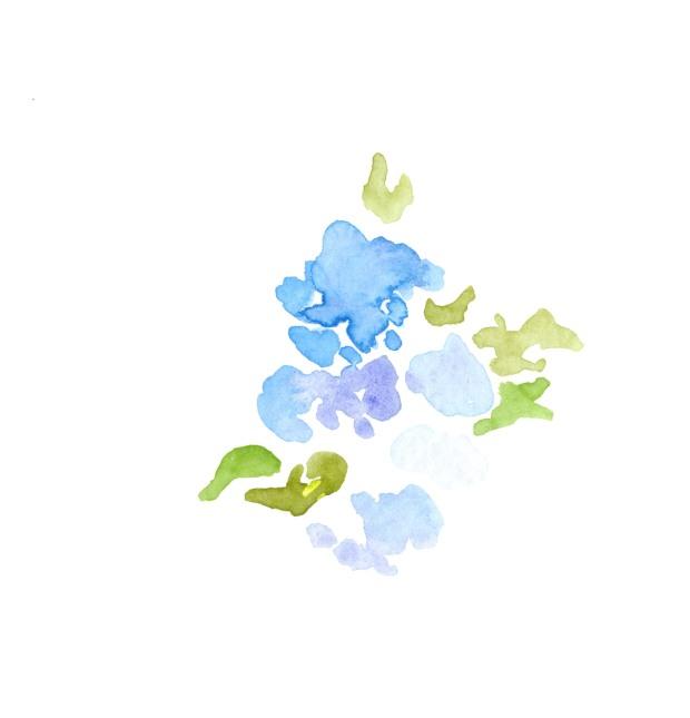 Hydrangeas. Watercolor on paper.