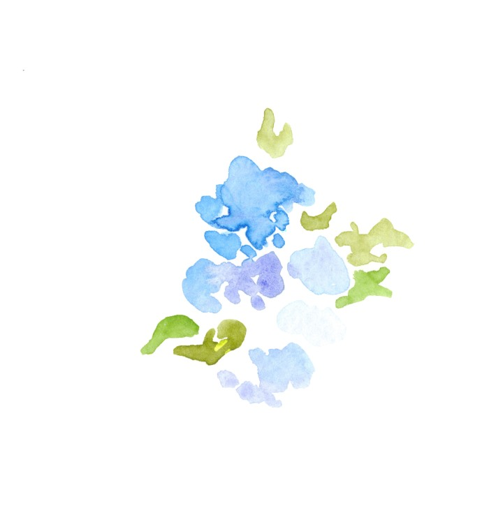 Hydrangeas. Watercolor on paper.