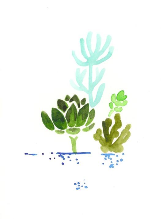 More Succulents.