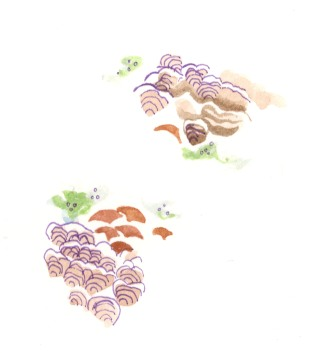 Lichen. Watercolor on paper.