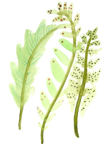 Fern-y. Watercolors on paper.