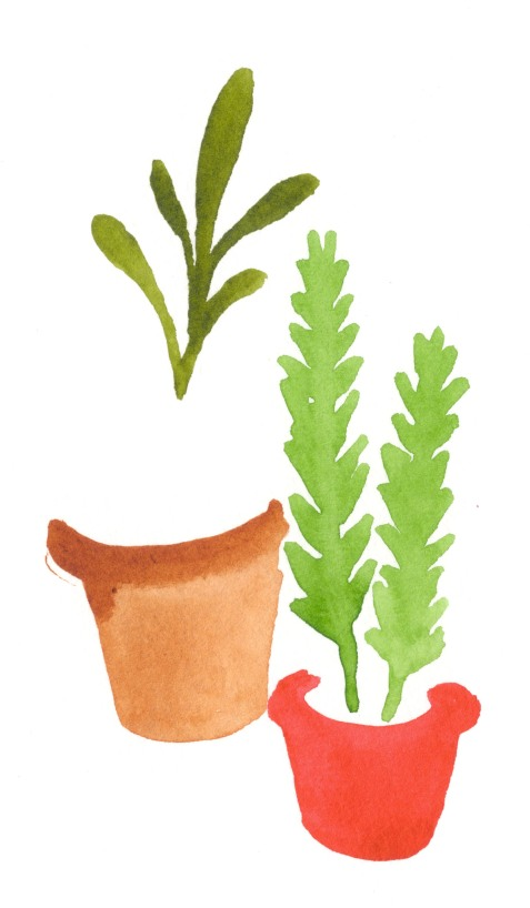 Plants. Watercolor on paper.